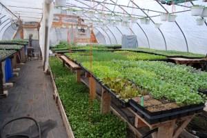 greenhouse at Windy Ridge